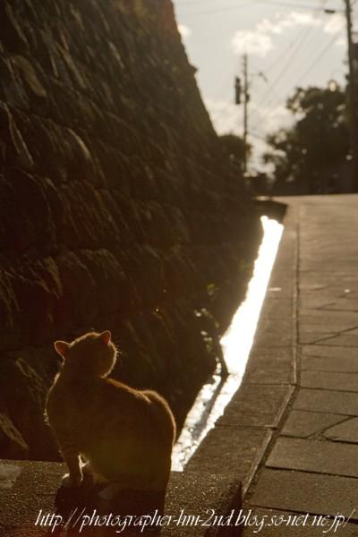 2011_振り返る猫_01.jpg